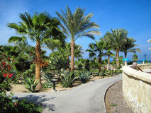 Palms and evergreen plants in Egypt Stock Image