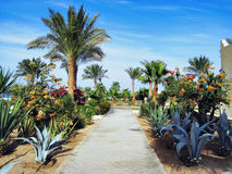 Palms and evergreen plants in Egypt Royalty Free Stock Photos