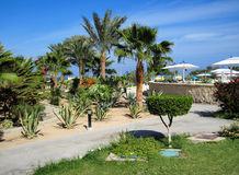 Palms and evergreen plants in Egypt Stock Images