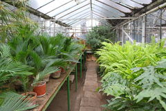 Palms and ferns in the greenhouse.  stock images