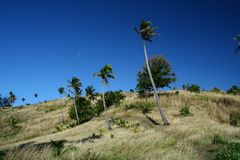 Palms in Fiji Stock Photo