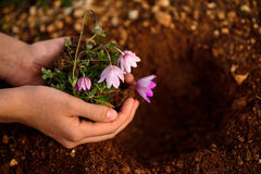 Flower planting soil Stock Photos