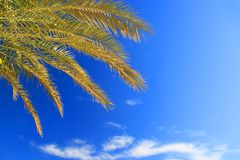 Palms foliage Royalty Free Stock Photography