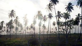 Palms Royalty Free Stock Photos