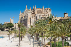 Palms in front of La Seu cathedral Stock Photos