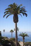 Palms in front of Pacific Ocean Royalty Free Stock Image