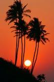 Palms goa. Sunset with palms in goa India Royalty Free Stock Photos
