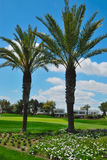 Palms golf course Royalty Free Stock Image