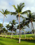 Palms on a golf field. Golf field and a resort near King plaza, Big Island Royalty Free Stock Photography