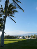 Palms on a golf field. Golf field across a pond from King plaza, Big Island Royalty Free Stock Image