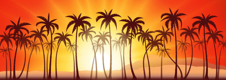 Palms grove sunset Stock Images