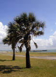 Palms on the Gulf. A couple of palm trees along the coast of the Gulf of Mexico. In the background is a public fishing pier. This was taken on the waterfront in Royalty Free Stock Photo