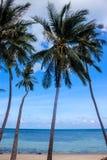 Palms on Haad Khom beach Stock Photography