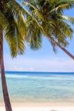 Palms at Haad Yao beach Stock Image