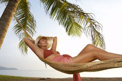 Palms and hammock Stock Photography