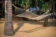 Palms with hammock on the sea cost Stock Images