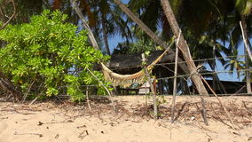 Palms and Hammock. View of nice white hammock hanging between two palms stock video