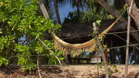 Palms and Hammock. View of nice white hammock hanging between two palms stock video footage