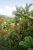Palms in Hawaii Stock Photos