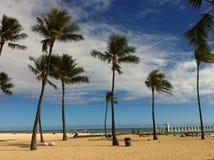 Palms on the Hawaiian beach Royalty Free Stock Image