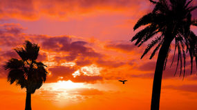 Palms and hawk silhouettes under a scenic sky Royalty Free Stock Image
