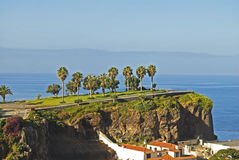 Palms on the hill. Madeira Island, Portugal. Row of palm trees on the cliff over the ocean in Camara de Lobos village on Madeira Island, Portugal Royalty Free Stock Image