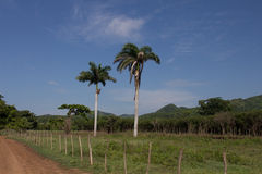 Palms and hills in Cuba. Palms and hills and a little bit of country in Cuba Royalty Free Stock Photography