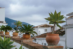 Palms and house plants in the pots standing over the roof at traditional mediterranean white spanish village, Mijas Stock Image
