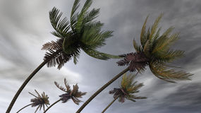 Palms at hurricane. Animation version is available royalty free stock photography