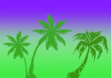 Palms illustration. With gradient background Royalty Free Stock Photography