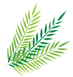 Palms in good friday Royalty Free Stock Photography