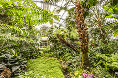 Palms inside the palmengarten Royalty Free Stock Image