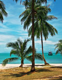 Palms on island Stock Images