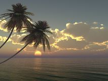 Palms on the island against the sunset Royalty Free Stock Image