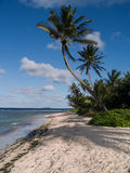Palms on Island beach. Palm lined beach on a Caribbean island in the afternoon Royalty Free Stock Image