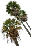 Palms isolated on white Stock Photos