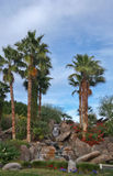 Palms at Jackalope Ranch in Indio Royalty Free Stock Images