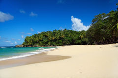 Palms jungle on calm caribbean beach Royalty Free Stock Photos