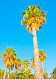 Palms in Kos Stock Photos