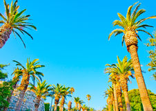 Palms in Kos Stock Photography