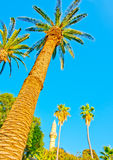 Palms in Kos Stock Photo