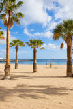 Palms of  las Teresitas beach, Tenerife, Spain Stock Photography