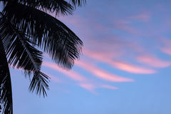 Palms leafs and pink clouds. Beautiful tropical sunset in Thailand Stock Photo