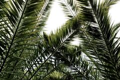 Palms Leaves Royalty Free Stock Photos