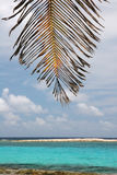 Palms leaves against sky. Palms leaves on a beach of famous summer resort island Half Moon Caye. Caribbean sea. Belize Stock Photo