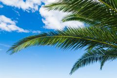 A palms leaves on the blue sky background. NBeautiful tropical summer view Royalty Free Stock Image