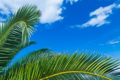 A palms leaves on the blue sky background.  Royalty Free Stock Photography