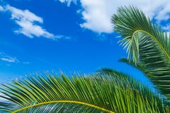 A palms leaves on the blue sky background. NBeautiful tropical summer view Stock Photo
