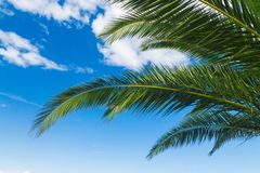 A palms leaves on the blue sky background. NBeautiful tropical summer view Royalty Free Stock Photos