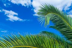 A palms leaves on the blue sky background. NBeautiful tropical summer view Stock Photography